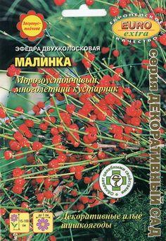 Efedra harilik ''Malinka'' Ephedra distachya