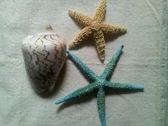Caracola y estrellas