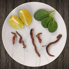Tauwürmer anködern: die 5 besten Varianten