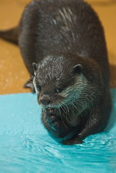 Otter gives the camera a coy look - December 8, 2012