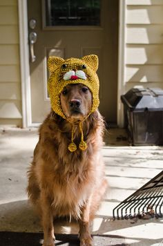 Dog wearing knitted cat hat - Hey, how'd he sneak in here!?