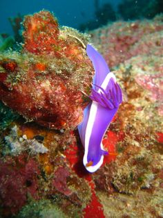 Sea slug - Nature Blogger