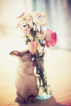 Getting in the Easter spirit? Take this quiz to see what bunny you are like in the favour of Easter, just for fun!