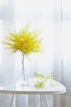 Simple Mimosa Flowers Arrangement in Tall Glass Vase/Bottle. Deco Floral, Arte Floral, Floral Design, Ikebana, My Flower, Fresh Flowers, Beautiful Flowers, Small Yellow Flowers, Draw Flowers