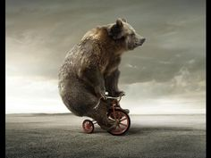 circus animal images free - Google Search