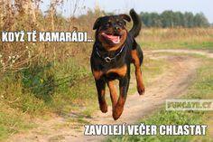 Nerf, Cute Dogs, Haha, Jokes, Marvel, Humor, Funny, Animals, Quote