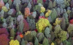 The National Arboretum at Westonbirt, Gloucestershire, England. Picture: Matt Cardy/Getty Images