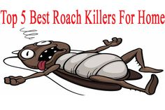Top 5 Best Roach Killers For Home. #Pest_Control #Pest_Control_Roaches #Rid_Roaches #Cockroaches #Cockroach_Trap #Cockroach_Killer #Roach_Killer