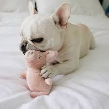Image result for theo french bulldog instagram