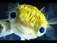 Adorable Pet Fish can be So Friendly and Playful – Best of Pet Fish Videos Vines Compilations 2017 - YouTube