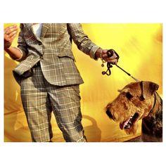 Landon Nordeman Instagrams Euro Dog 2012. Click-through for more photos.
