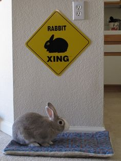 Bunny has the right of way - November 2, 2012