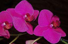 orchidėja by Alma Kerpauskiene on 500px