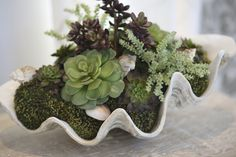 Succulent Plant what Pot Size -   I have 2 old shoes that I have planted  succulent plants in... lots of comments about them..
