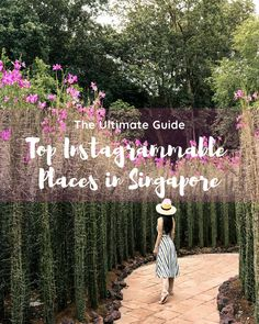 Cool free things to do in Singapore that you must do and won't believe are actually free. Great for when you're visiting one of the most expensive cities in Southeast Asia. Singapore Travel Outfit, Singapore Travel Tips, Visit Singapore, Singapore Itinerary, Singapore Food, Singapore Garden, Gardens By The Bay, Instagram Worthy, Instagram Story