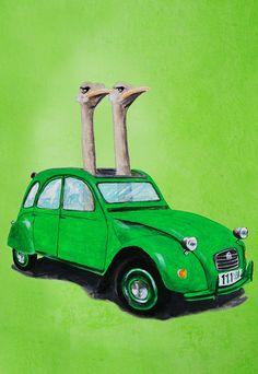 Ostriches in a green car
