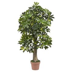 4 Schefflera Silk Tree * Find out more about the great product at the image link.