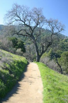 Rancho San Antonio County Park is my favorite place to trail run
