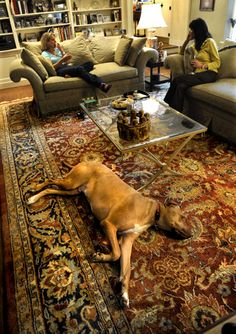 images for rooms with oriental rugs - Google Search