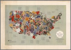 """This 1955 map of """"The Wild Flowers of Spring,"""" a collaboration between a botanist,Edgar Wherry, and an abstract expressionist painter, Clayton Whitehill, locates early-blooming American wildflowers geographically. The flowers are numbered and lettered, with common names appearing around the perimeter of the map. Both Wherry and Whitehill were Philadelphians."""