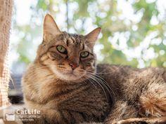 CatLife猫写真壁紙 2014年6月