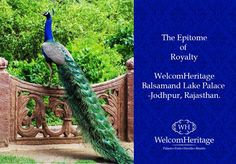WelcomHeritage Bal Samand Lake palace, Jodhpur.. ‪#‎peacock‬ ‪#‎kingdom‬ ‪#‎Palace‬ ‪#‎heritage‬ ‪#‎history‬ ‪#‎culture‬ ‪#‎Rajput‬ ‪#‎architecture‬ ‪#‎terrace‬ ‪#‎gardens‬ ‪#‎royal‬ ‪#‎retreat‬ ‪#‎lushgreen‬