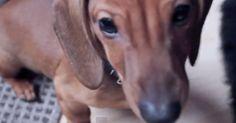 Hunden smyger sig närmre och närmre för varje gång ägaren kikar fram http://blish.se/b65404df4c #hundar #lekar #ninja #humor