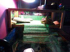 Τουλης χελωνα νερου aqua turtle