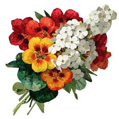 Free Vintage Flower Bouquet Image