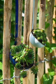 NETŘESKY, rostliny do škvír a skulin | Chatař & Chalupář