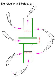 ch Online Training – Exercise with 6 Poles – horsephysio.ch Online T… horsephysio.ch Online Training – Exercise with 6 Poles – horsephysio.ch Online Training - Art Of Equitation Horse Riding Tips, Horse Tips, Trail Riding, Horsemanship Patterns, Horse Exercises, Horse Training, Training Tips, Riding Lessons, Dressage Horses