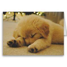 Sleeping Golden Retriever Puppy Card