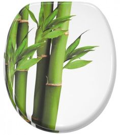 Plants that are not toxic to cats and non australian . plants that are not toxic to cats house Toxic Plants For Cats, Cat Safe Plants, Cat Plants, Bamboo Plants, Indoor Plants, Michael Johnson, Facts About Plants, Golden Bamboo, Siberian Cats For Sale