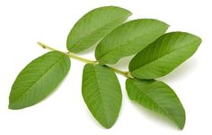 Guava leaves have taken the internet by storm with claims of it being a miracle solution for hair loss.