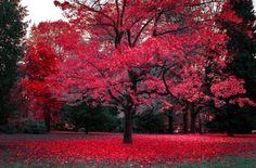 Crimson Park, Vancouver, Canada