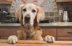 Healthy Fall Treats For Pets