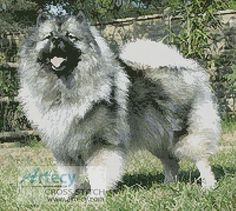 Keeshond Cross Stitch Pattern http://www.artecyshop.com/index.php?main_page=product_info&cPath=1_7&products_id=224