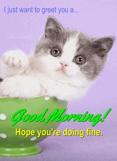 Today let this #Cute #Kitty greet your Loved ones #GoodMorning on your behalf!