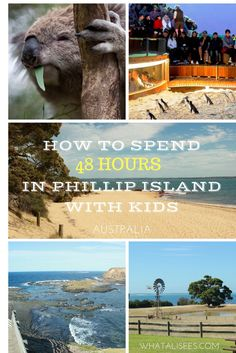If close encounters with Australian wildlife and relaxing on a secluded beach sounds like a dream getaway, then head to Phillip Island with kids stat!
