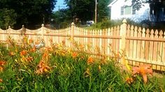Scalloped Gothic wood picket fence with Gothic post caps