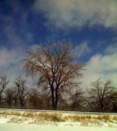 Winter Day Tree