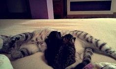 I have a small cats! #small #cat #sweet #love