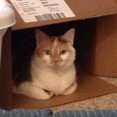 Jewell Ann - she loves her boxes and practices her grumpy face often.