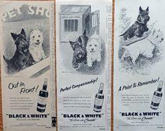 Morgan Dennis  50 s  Illustration  print art   Black and White Scotch Whiskey  pretty little dogs