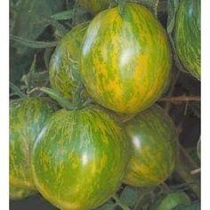 Green Zebra Tomato 65 Seeds - SWEET yet ZINGY $3.99
