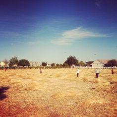The Farm at #Agritopia in #GilbertAZ.
