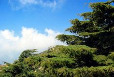 http://en.wikipedia.org/wiki/Lebanon