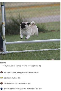 When this pug achieved all its dreams. 23 Of The Cutest Things That Have Ever Happened On Tumblr.