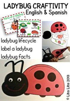 Ladybug life cycle and facts English-Spanish$