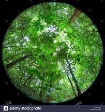 Image result for fisheye lens canopy